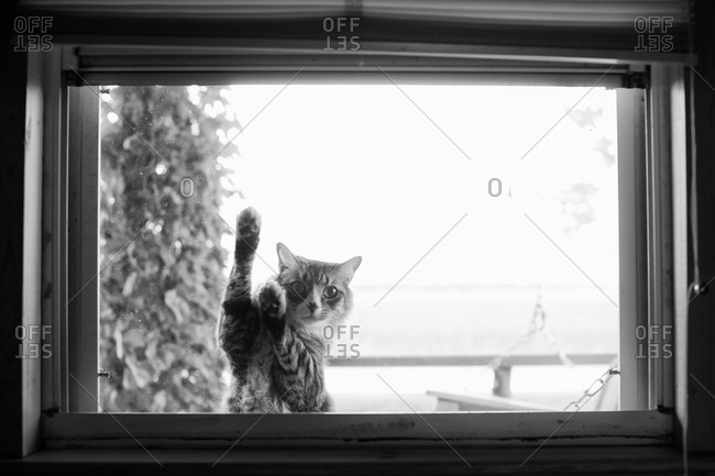 Cat begging to come inside