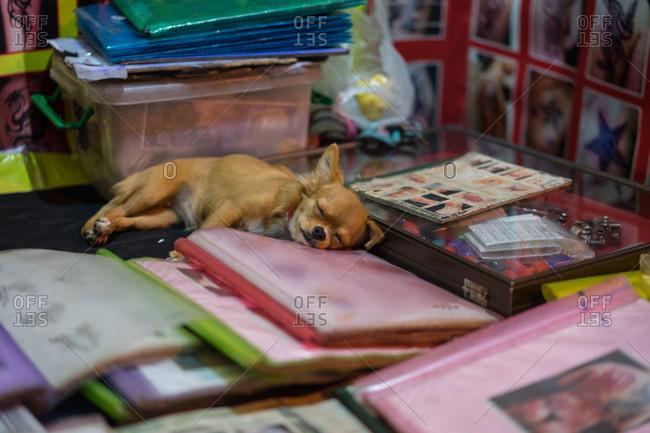 Sleeping dog at Bangkok night market