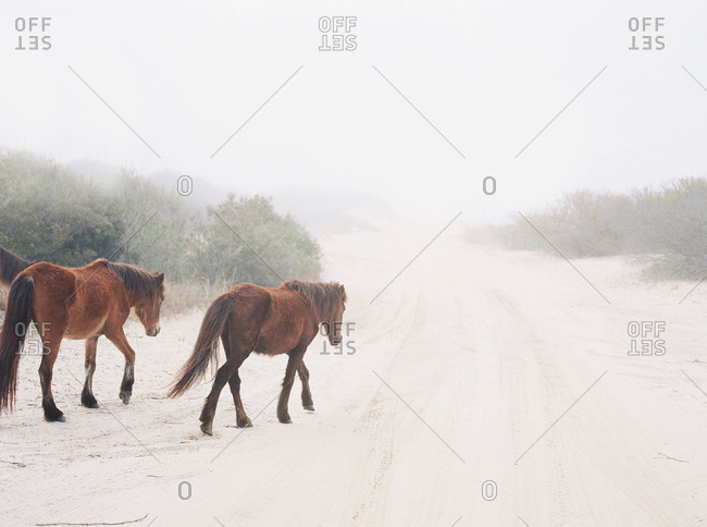 Two horses walking in foggy winter pasture