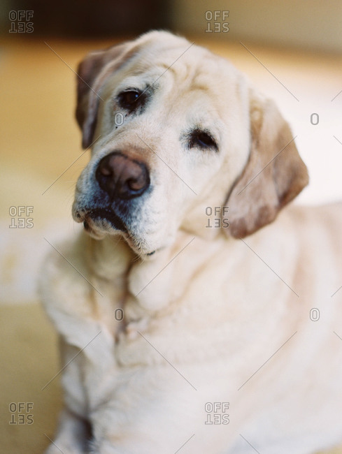 Older dog looking sad