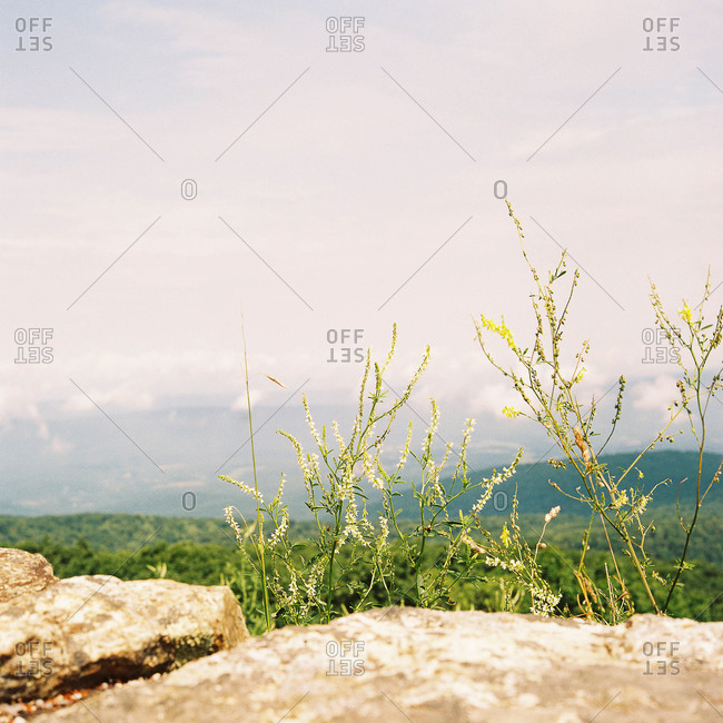 Stones and wildflowers overlooking mountain plain