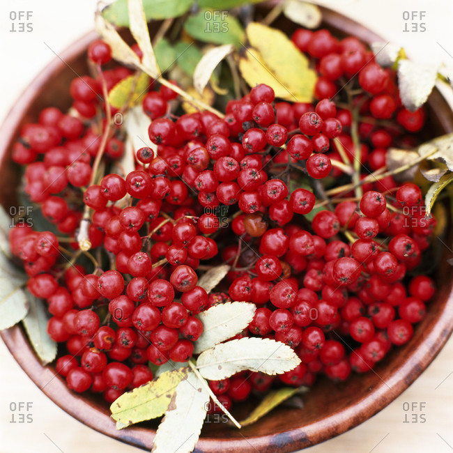 Rowanberries in a bowl