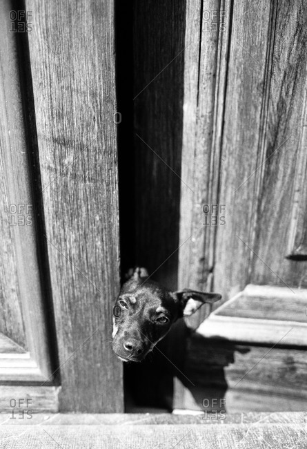 A dog peeks out of a door