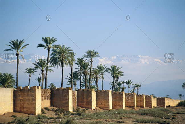 Palm trees in front of the Atlas Mountains