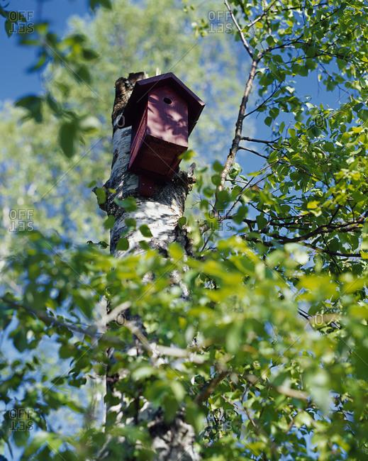 A birdhouse on a tree stump