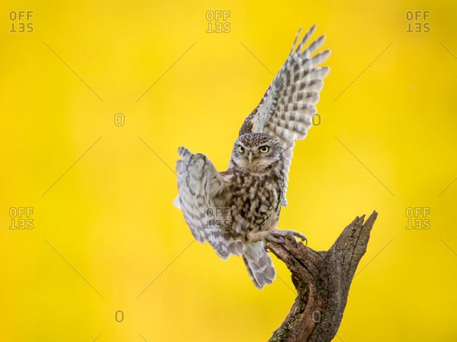 Owl perching on a tree branch