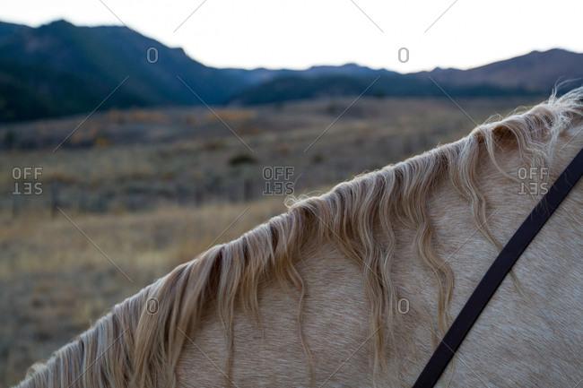 A horse's wavy mane