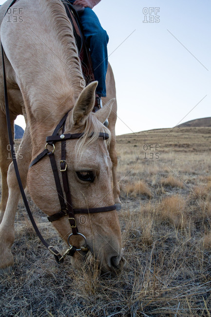 A horse eats dry grass in the countryside