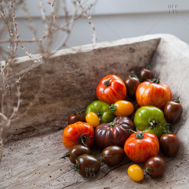 Pile of tomato varieties