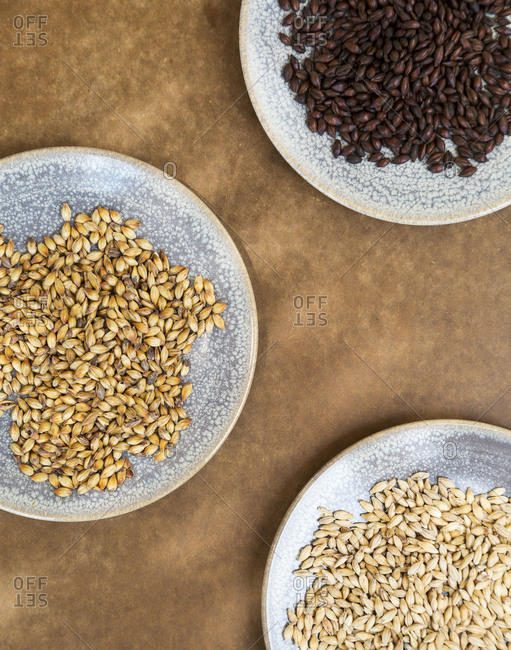 Three kinds of malt grains for brewing beer