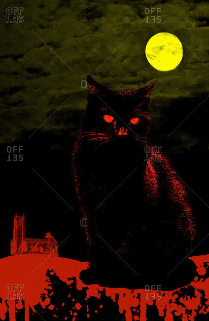 Black cat in a moonlit night