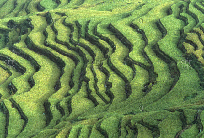 Aerial view of rice terraces near Yuan Yang in southern Yunnan Province, China