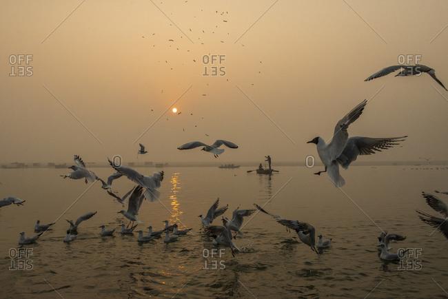 Birds and a fisherman in Varanasi