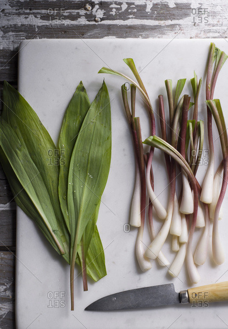 Ramps, perennial wild onions that grow in early spring, on a marble cutting board with a knife