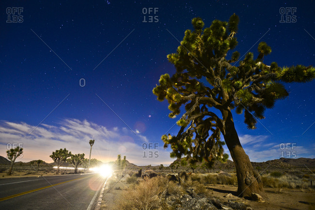 Light trails from a car at night through Joshua Tree National Park