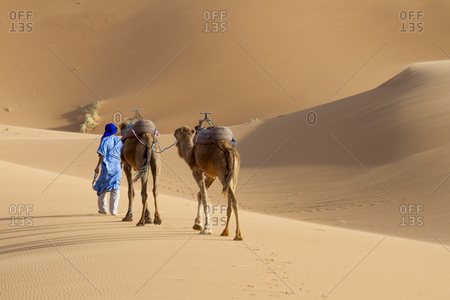 Tuareg man wearing a djellaba leads his camels in the sahara desert Merzouga, Morocco
