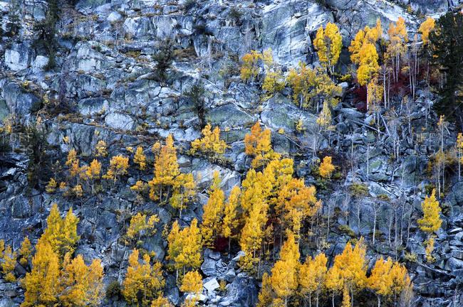 Granite on hillside above Lake Sabrina, Eastern Sierra, CA