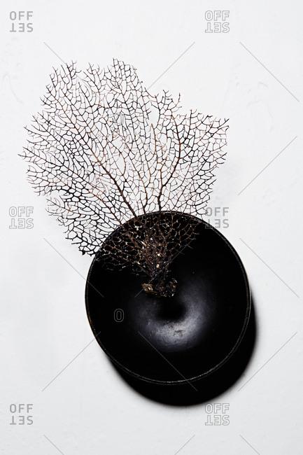 A sea fan in a black bowl