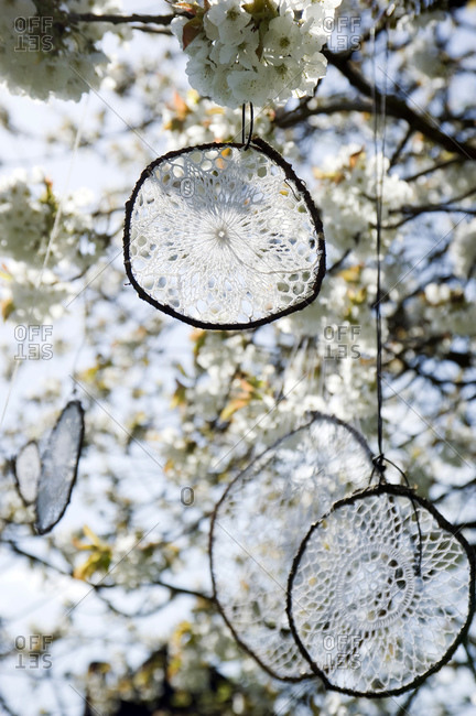 Dream catcher, made from old crochet tablecloths, hanging in blossoming cherry tree