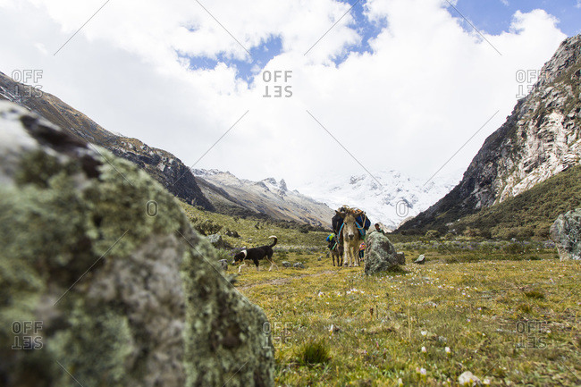 Donkeys carrying supplies in the Ishinca Valley, Andes, Peru