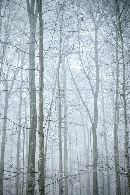 Misty forest near Schelklingen in Baden-Wuerttemberg, Germany
