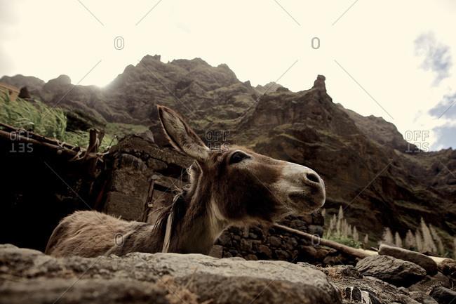 Donkey in a pen in Praia, Santiago, Cape Verde