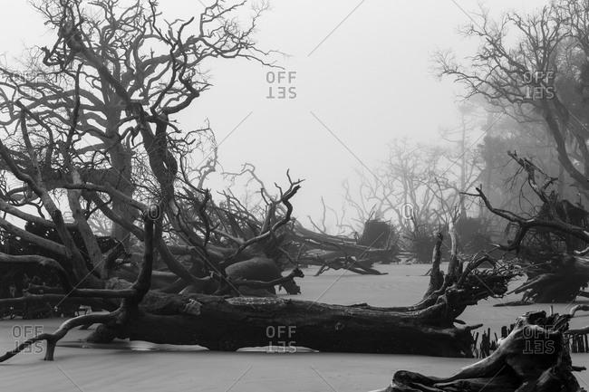 Felled trees on the shore of St. Helena Island in South Carolina