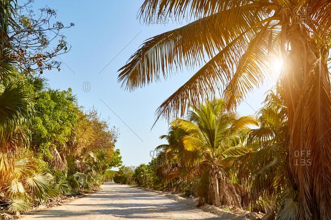 Tropical sand road through vegetation