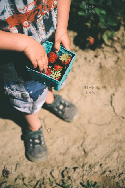Boy holding a small basket of strawberries
