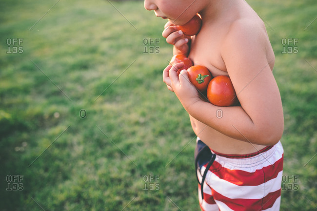 Boy holding an armload of fresh tomatoes