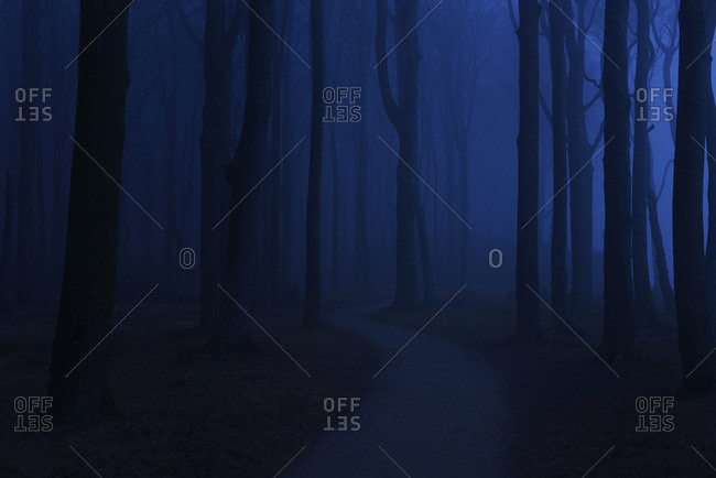 Coastal beech forest with path and fog at night