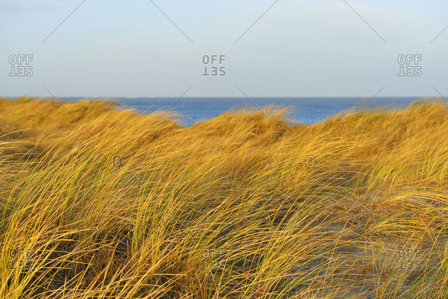 Sand dunes with sea, Helgoland