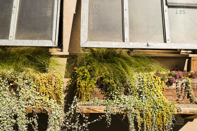 Close-up of window planters, Brooklyn, New York City
