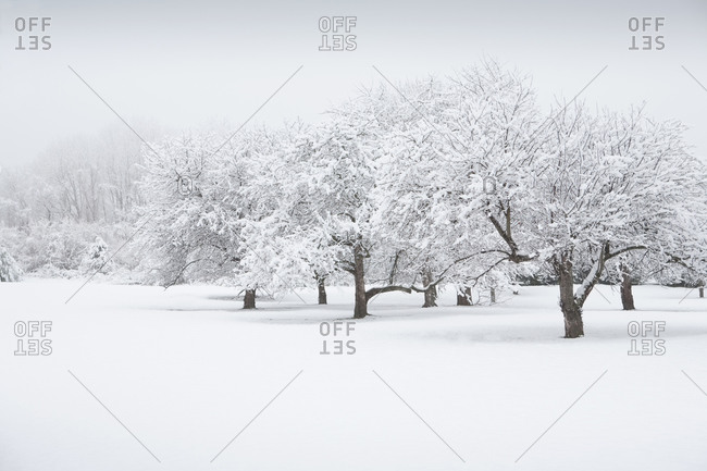 Winter landscape in New Jersey, USA