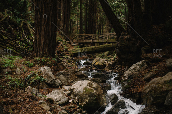 A wood bridge over a forest brook