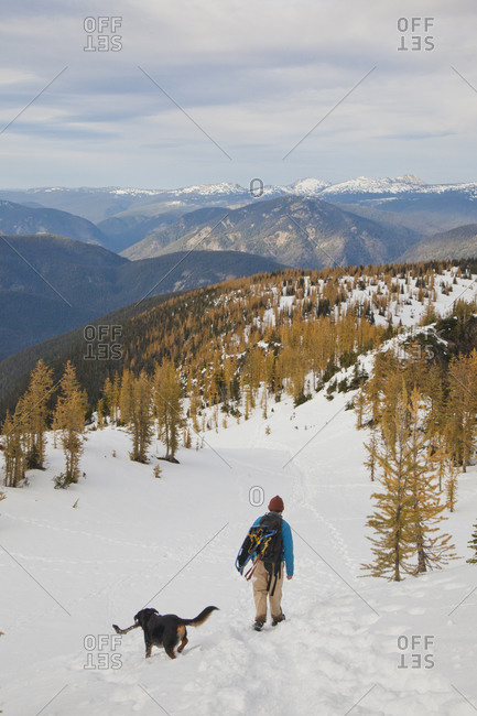 A backpacker and his dog hike through a snow field towards a larch forest