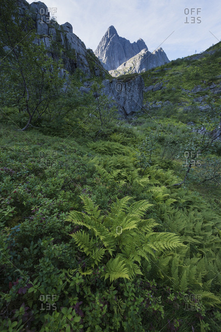Fern grows in lush mountain valley with Trolltindan peaks rising in the distance, Trollfjord, Austvågøy, Lofoten Islands, Norway