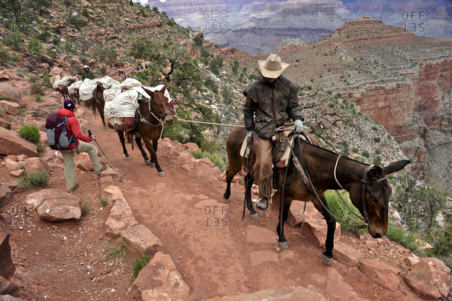 Female hiker waits for pack horses to pass on the South Kaibab Trail in Grand Canyon National Park