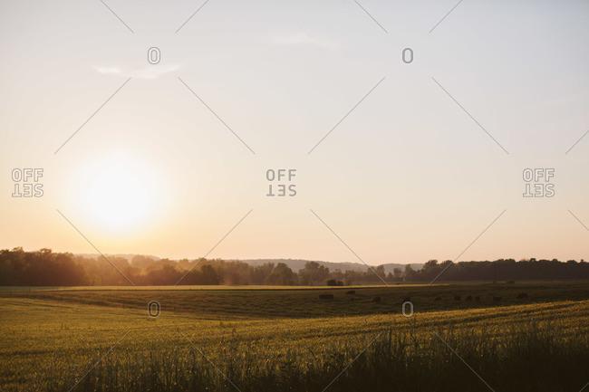 Tranquil farmland field at dusk
