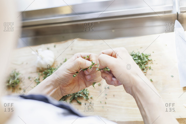 Close up of chef tearing thyme leaves off a stalk