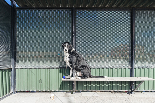 Dog sitting in a bus stop