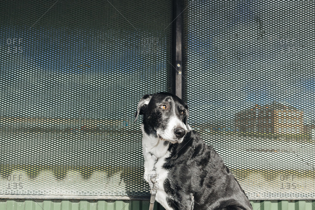 Dog waiting at a bus stop