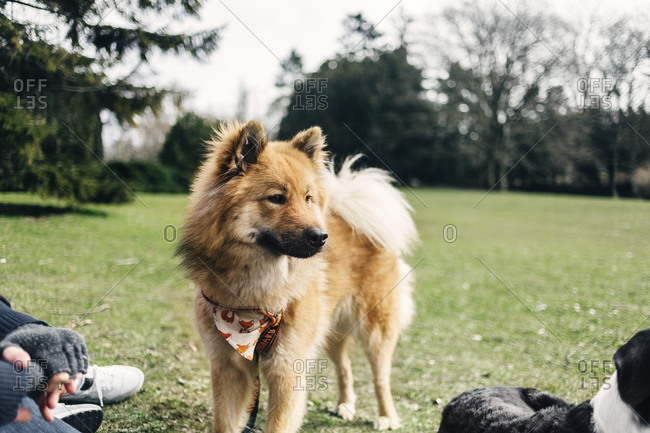 Furry dog in a park