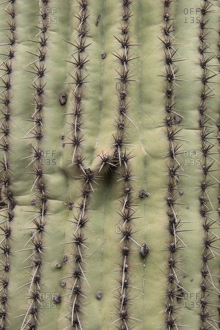 Close up of a cactus' spines