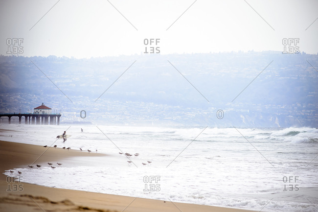 Surfer and sandpipers on Manhattan Beach, California