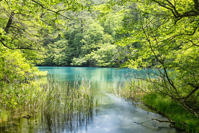 Blue water of a Goshiki-numa lake in Urabandai, Fukushima, Japan