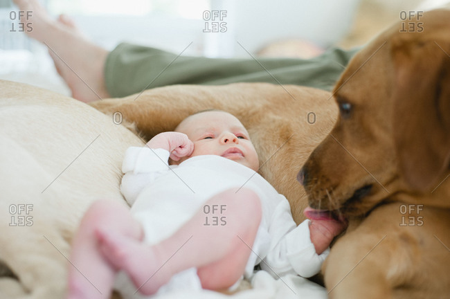A newborn baby lays with a dog