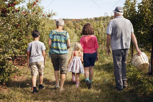 Grandparents and grandchildren apple picking