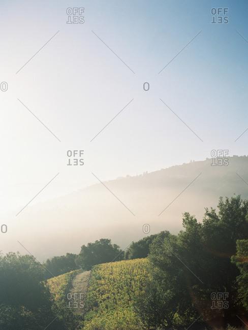 Sunrise disperses fog over a hillside vineyard