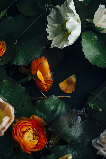 Close up of white and orange peonies